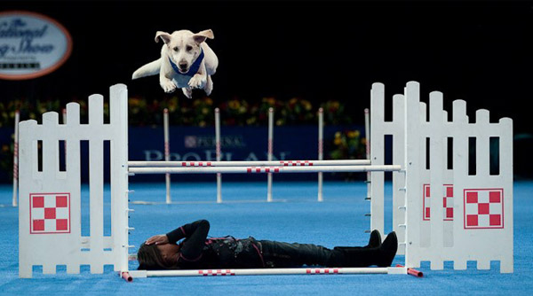 The National Dog Show Presented by Purina